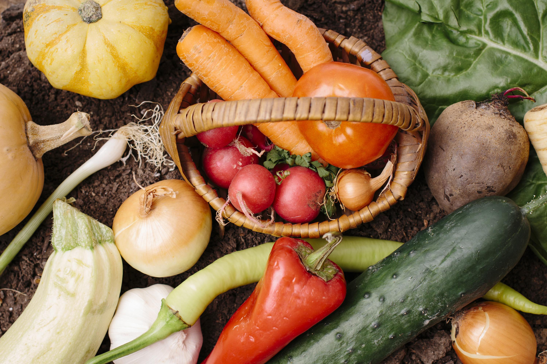 生産者と連携した新顔野菜の契約栽培